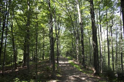 Może i cały czas las ale jaki przyjemny