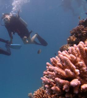 Dziwy podwodnego świata :)