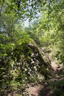 Szlak na Zelejową